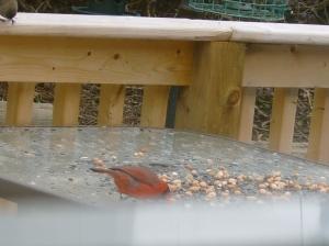 Cardinal different view