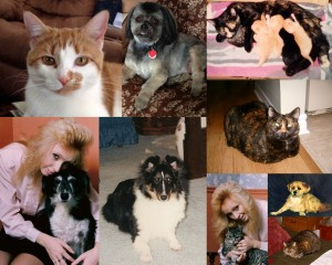 Our much loved pets