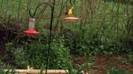 HUMMINGBIRD FEEDER AND ORIOLE FEEDER